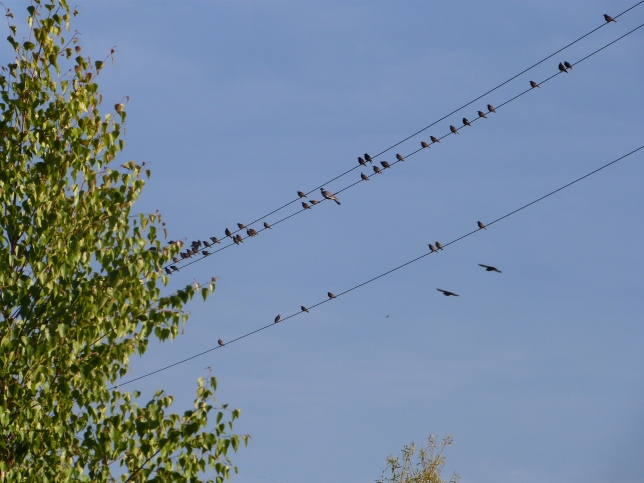 All these birds assembled to join us during our Solstice channel and group healing session